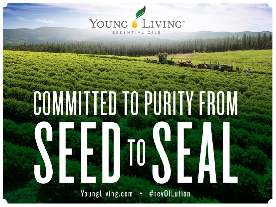 YL Seed to Seal
