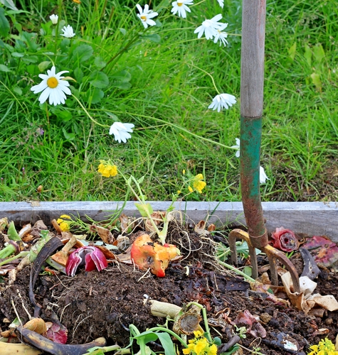 Compost pile with daisies